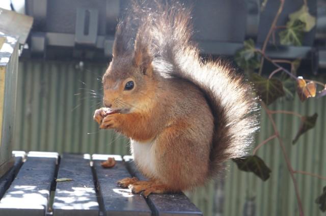 april_sunny_squirrel